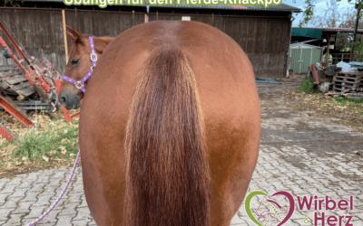 Übungen für den Pferde-Knackpo